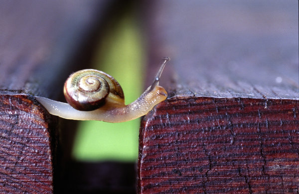 snail_the_traveller_by_nilsphotos-d1uzlxu
