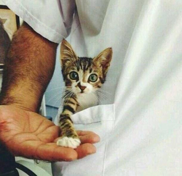 cat-color-cute-cute-cat-Favim.com-3536246