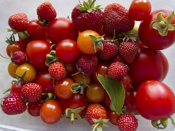 red-harvest-3298