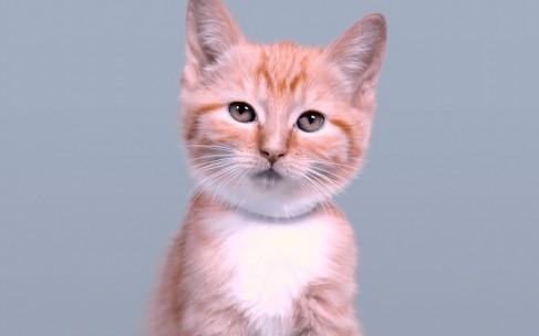 Как изменилась кошачья красота за 100 лет?