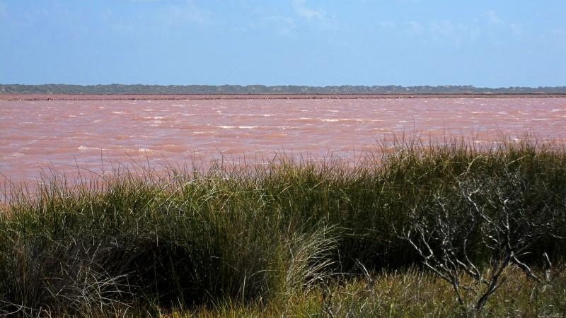 Hutt_Lagoon,_Western_Australia