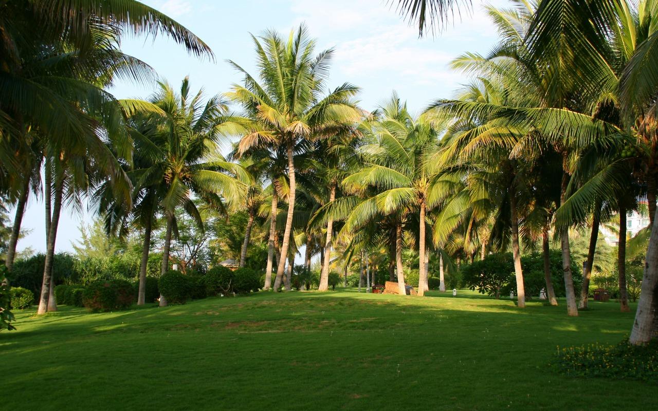 priroda-kitay-palmy-trava