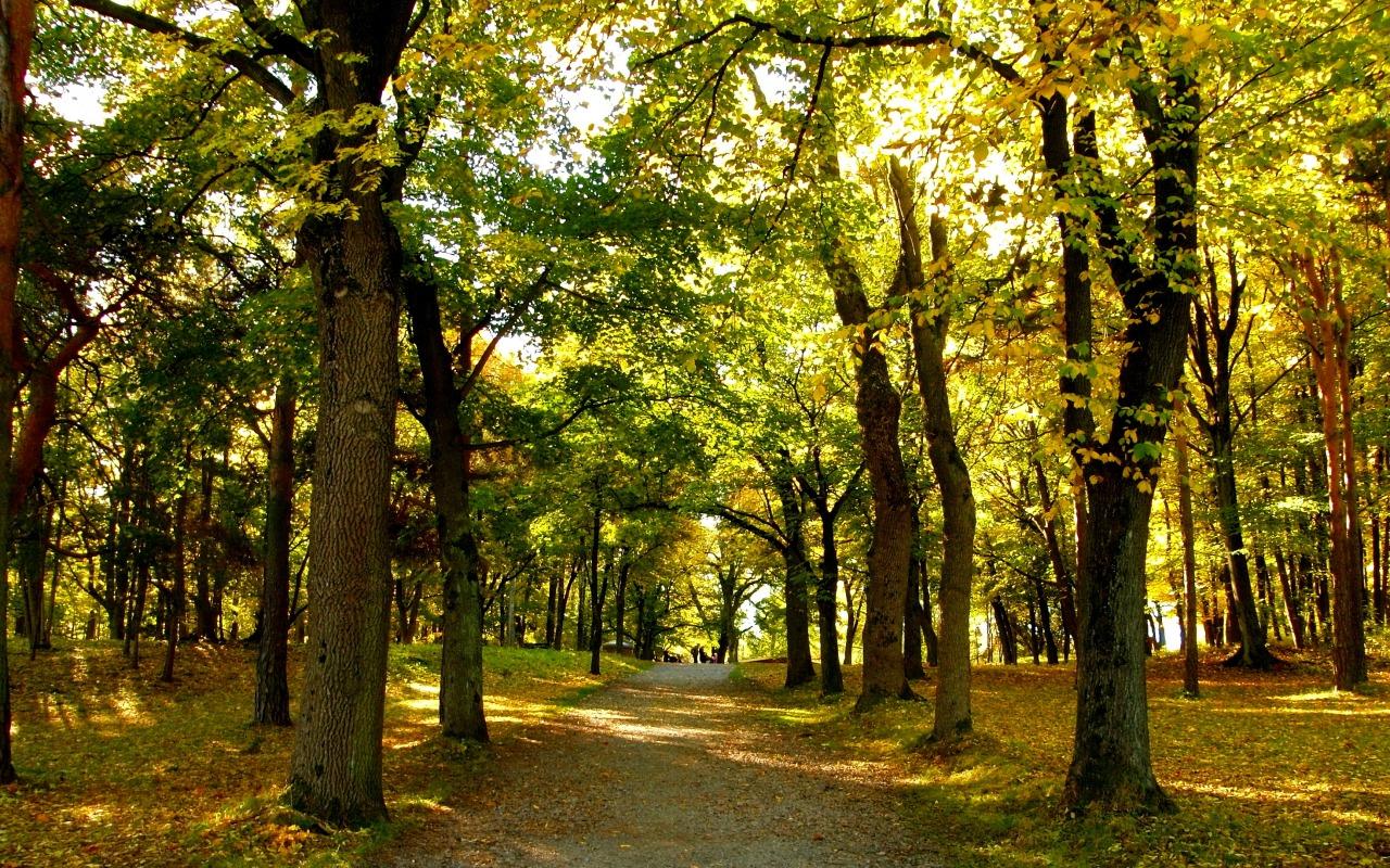 norway-oslo-autumn-fall-park