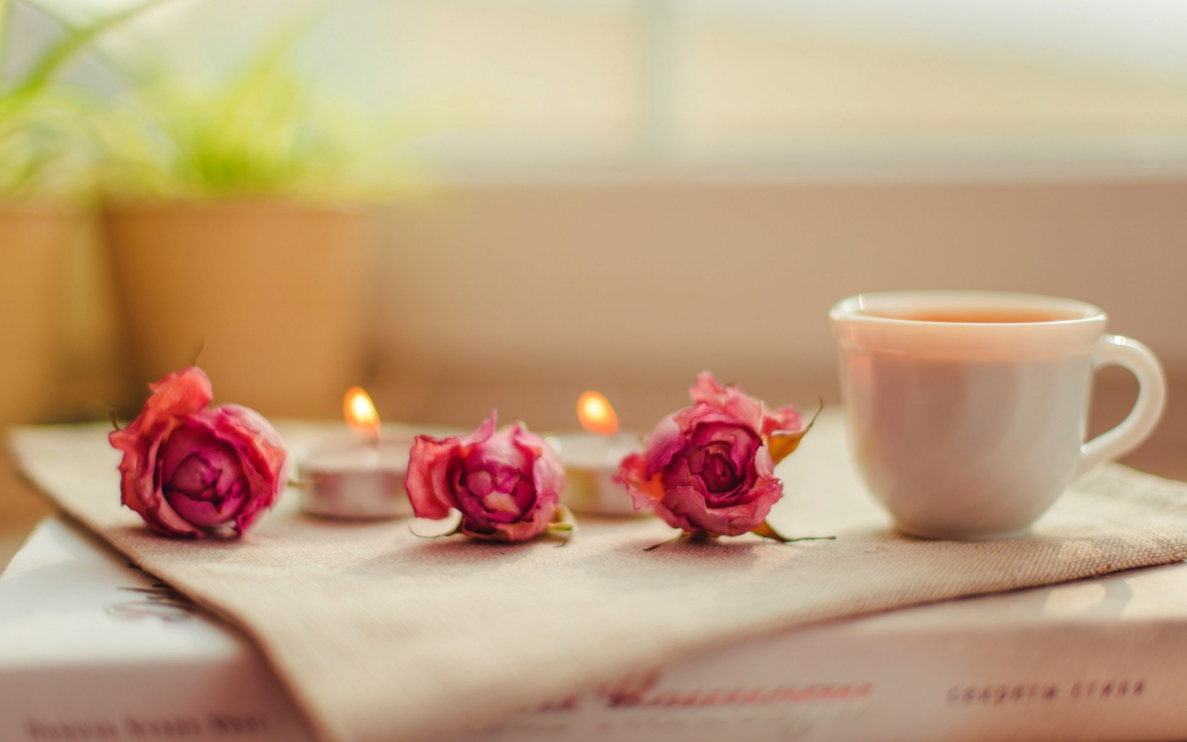 candles-cup-roses-pink-flowers-mood-hd-wallpaper