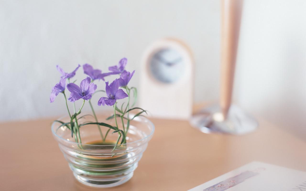 makro-cvety-flowers