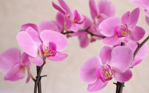 Самые красивые цветы