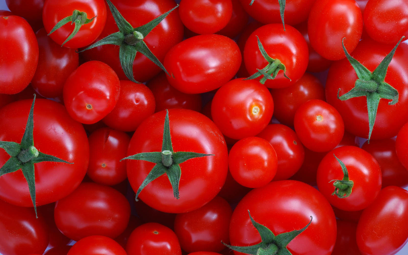 fantastic-tomatoes-wallpaper-44461-45587-hd-wallpapers