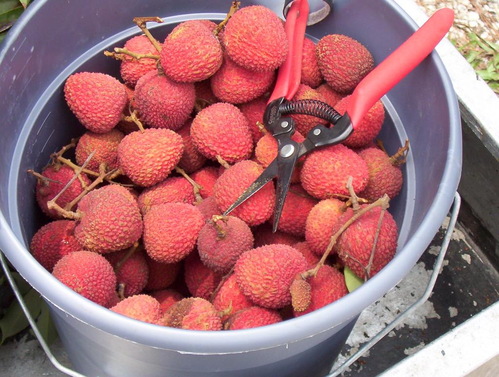 Необычный экзотический фрукт: личи