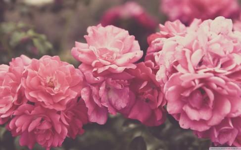 Как выбрать ее любимые цветы?
