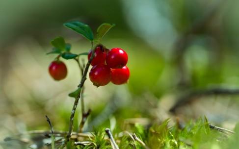 Польза ягодных соков