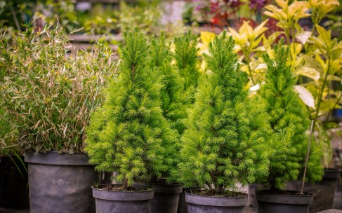 Модные растения для сада, не требующие сложного ухода