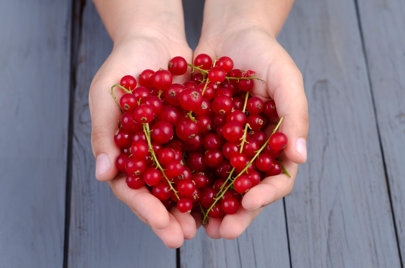 Image: 0174722909, License: Royalty free, Hands with redcurrants, Property Release: No or not aplicable, Model Release: No or not aplicable, Credit line: Profimedia.com, Westend