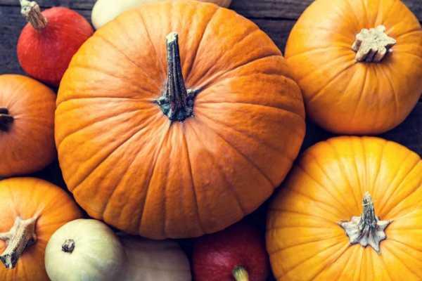 10-super-proizvoda-koje-vredi-jesti-tokom-jesenje-sezone (11)