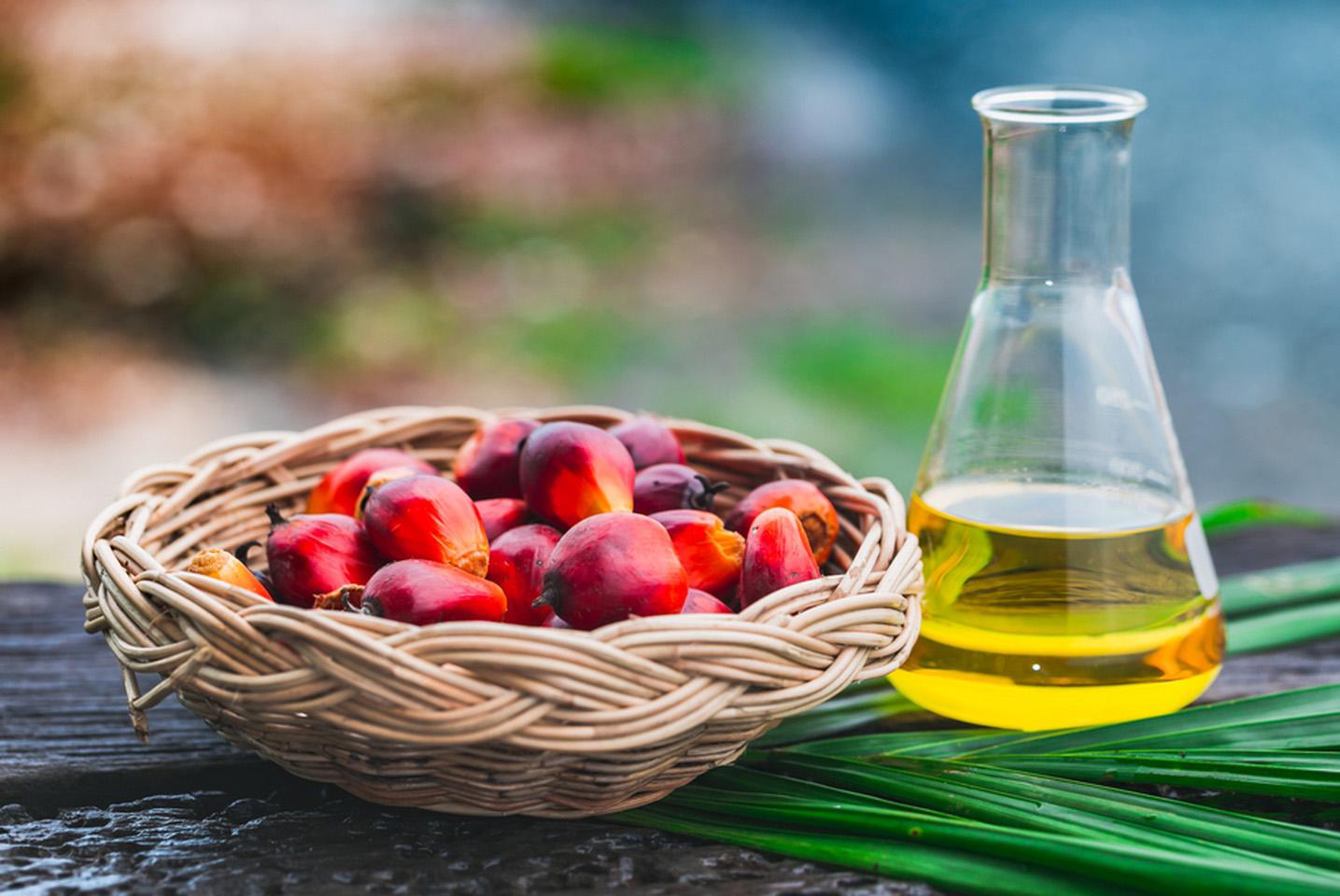 Пальмовое масло: вредно или полезно?