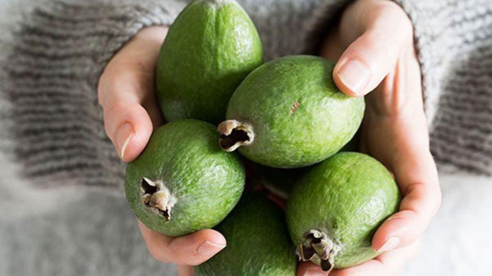 Feijoa-voce-Guava-ananas-Fedjoja-seme-Acca-sellowiana_slika_O_107809223