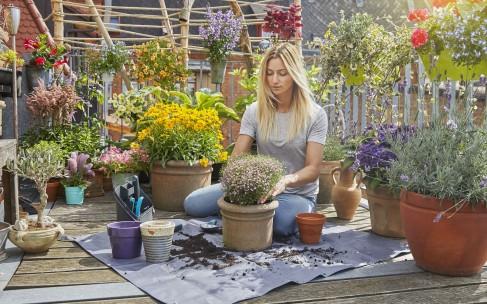 Что делать с растением после покупки?