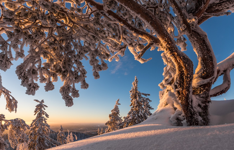 koli-national-park-north-karelia-finland-natsionalnyi-park-k