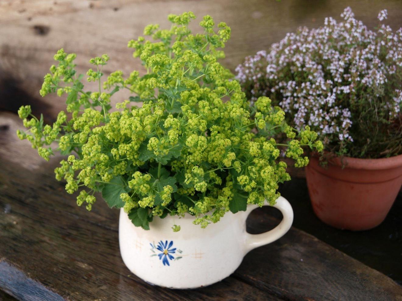 Лекарственные растения для омоложения