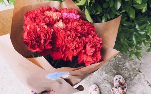 Цветы в доме: комнатные растения