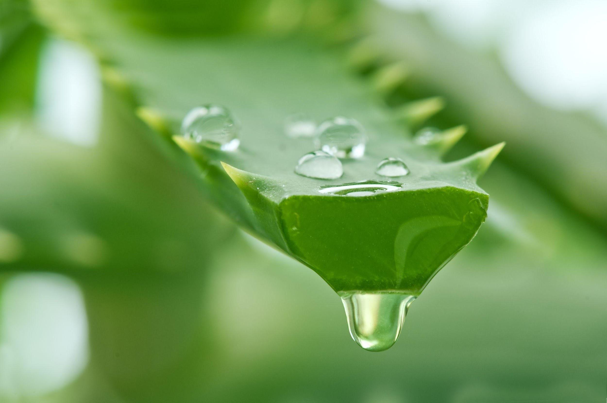 Natural Aloe Vera: Maxler