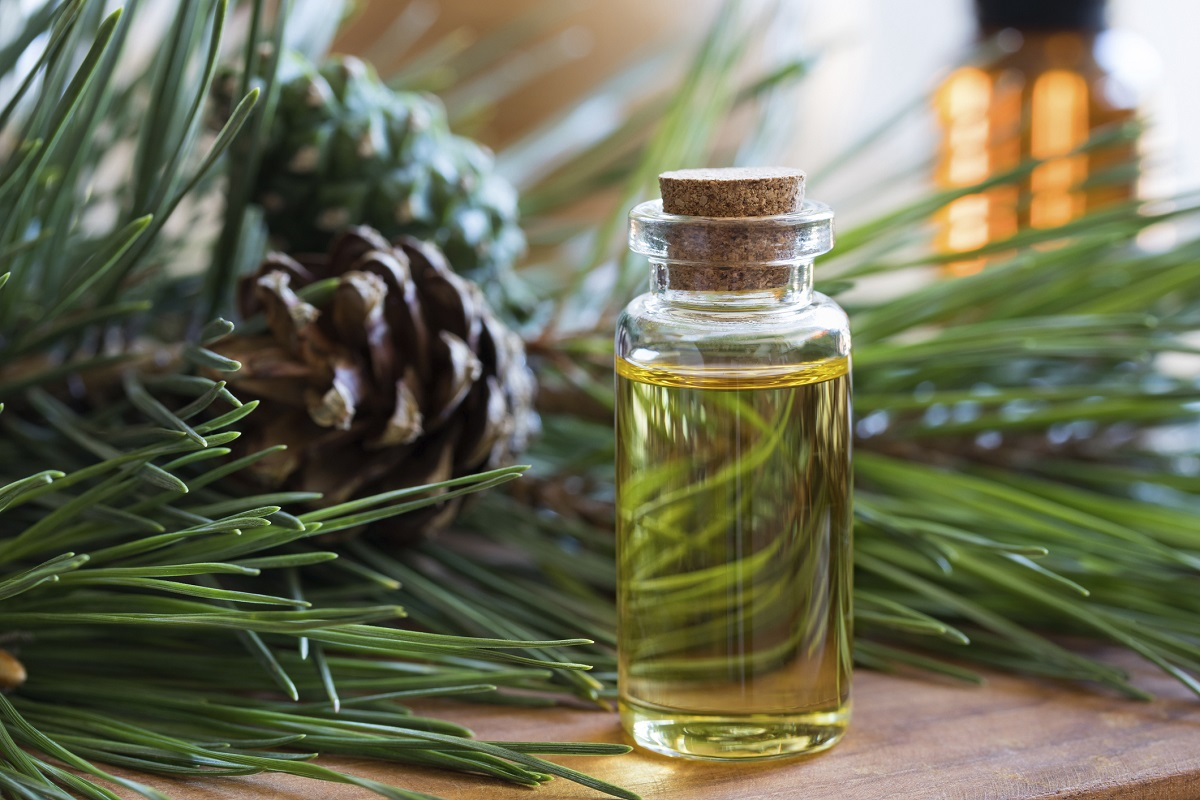 A bottle of pine essential oil with fresh pine twigs