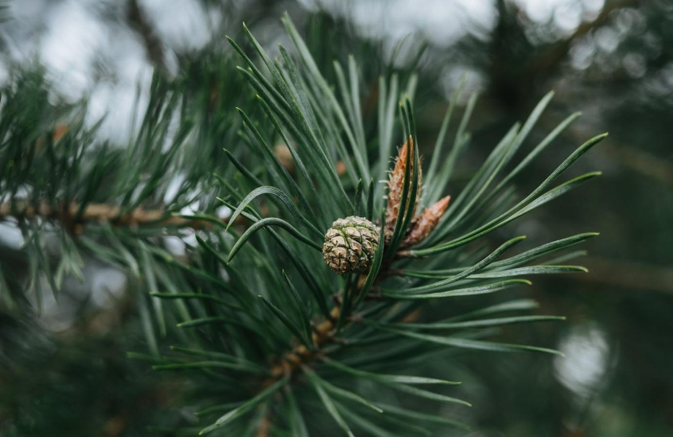 Naturella и WWF России сохраняют сибирские леса