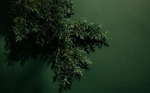 Ароматы с нотами кедра: звезды древесных ароматов