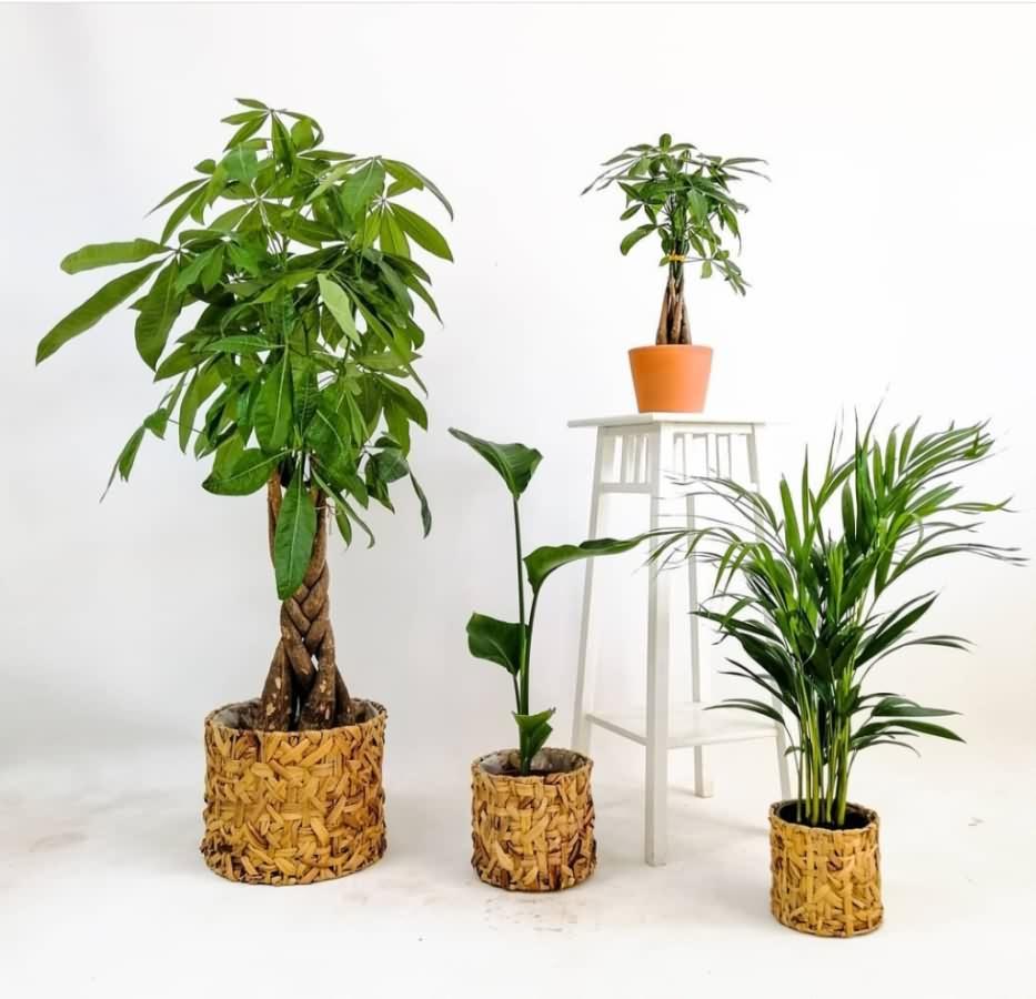 biljke2