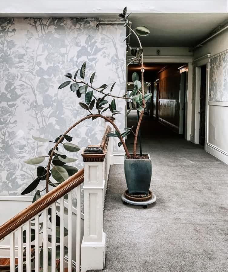 biljke5