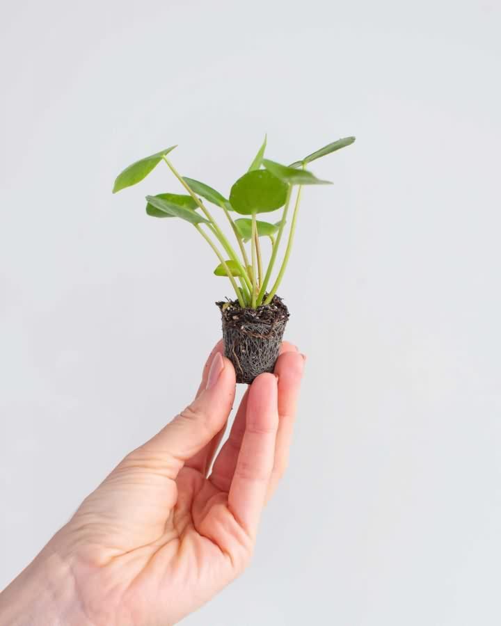 biljke8