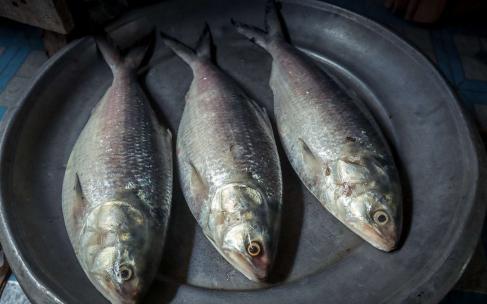 Рыба, которую не стоит есть