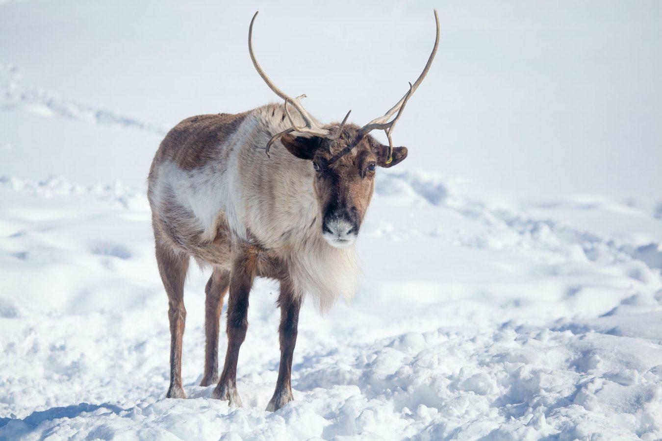 Увидеть и полюбить Ямал: Discover Yamal