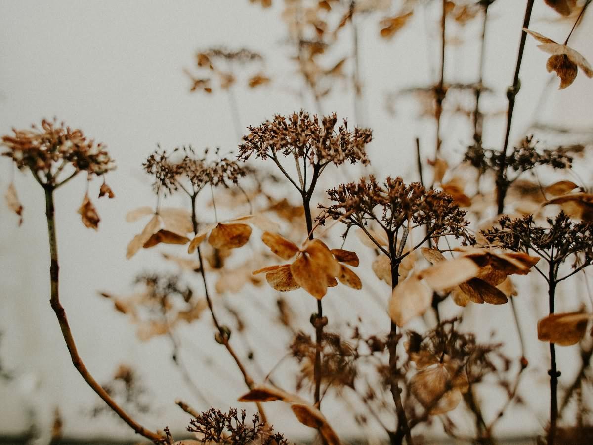 Растительные экстракты в косметике: большой гид