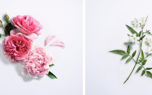 Lancome Rose Peonia i Jasmin D'Eau