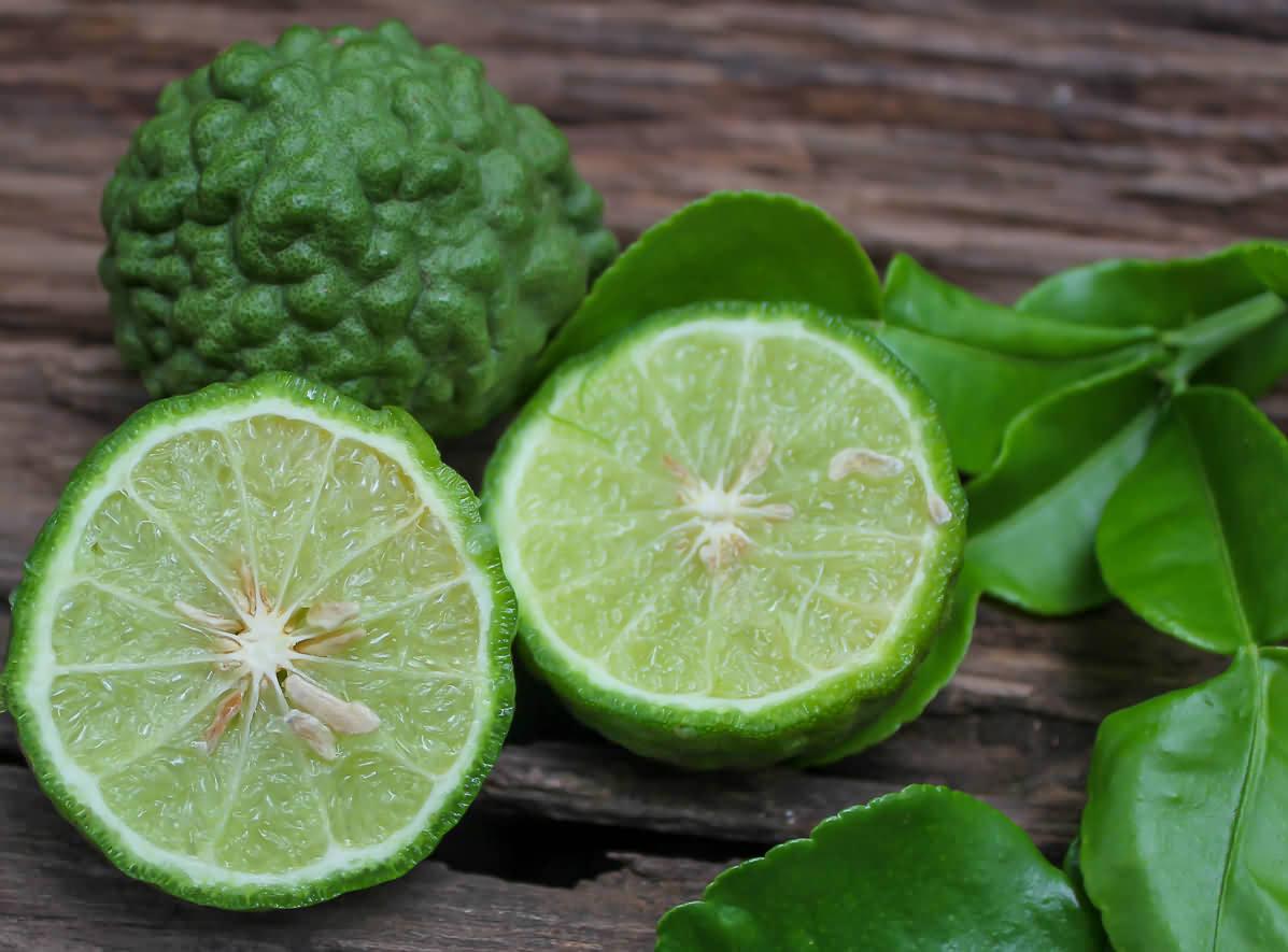 Kaffir-Lime-Tree-05