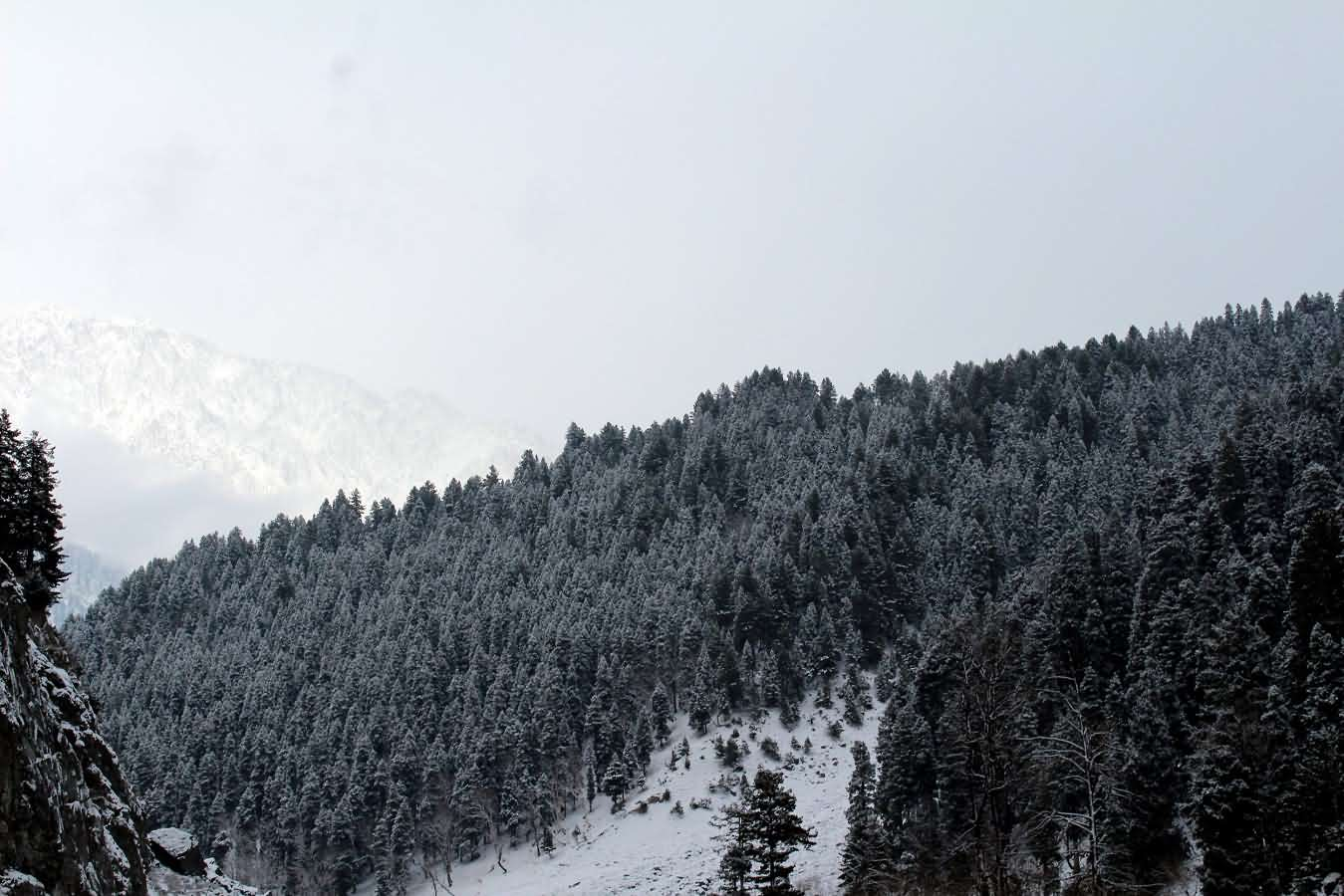 Amouroud himalayan woods