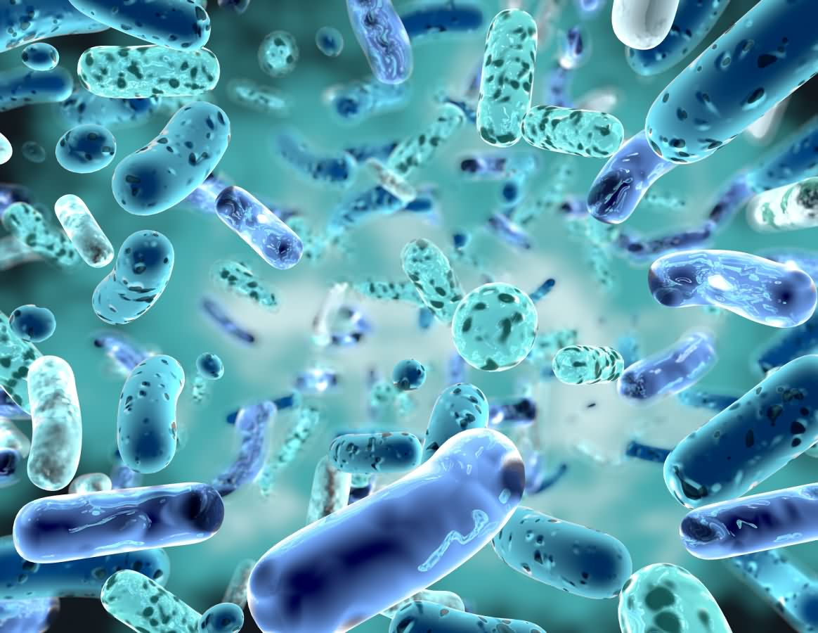 Probiotics-players-express-solid-supply-expectations-amid-surging-sales
