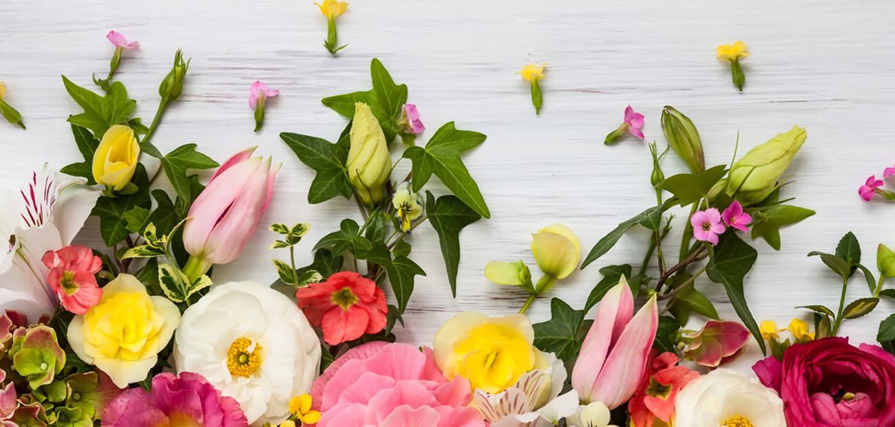 cvetni-mirisi-baner